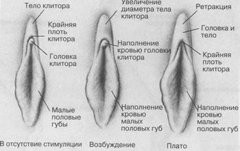 длительность оргазма мужчин и женщин-фс2