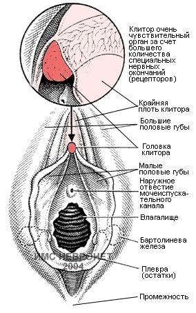 chuvstvitelnost-ot-razmera-klitora